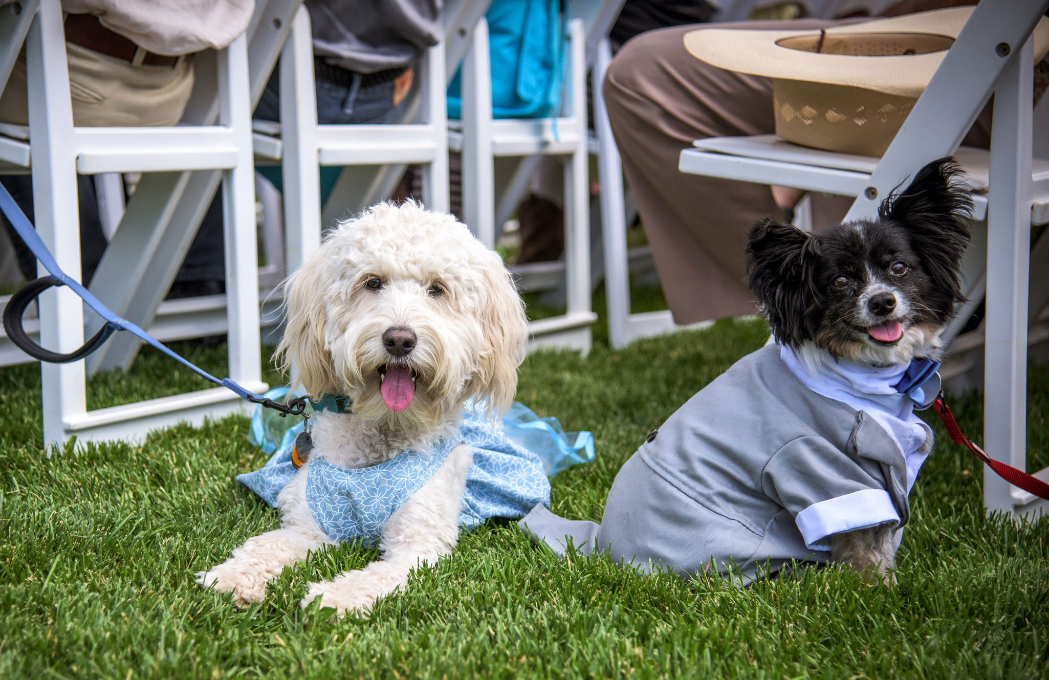 Puppies | Weddings at River Bend Ranch, Durango