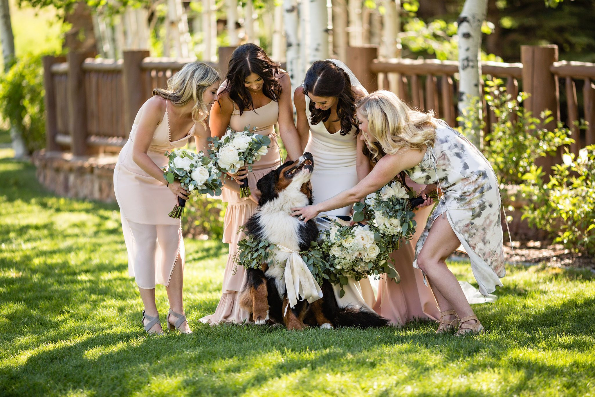Dogs at Colorado Weddings
