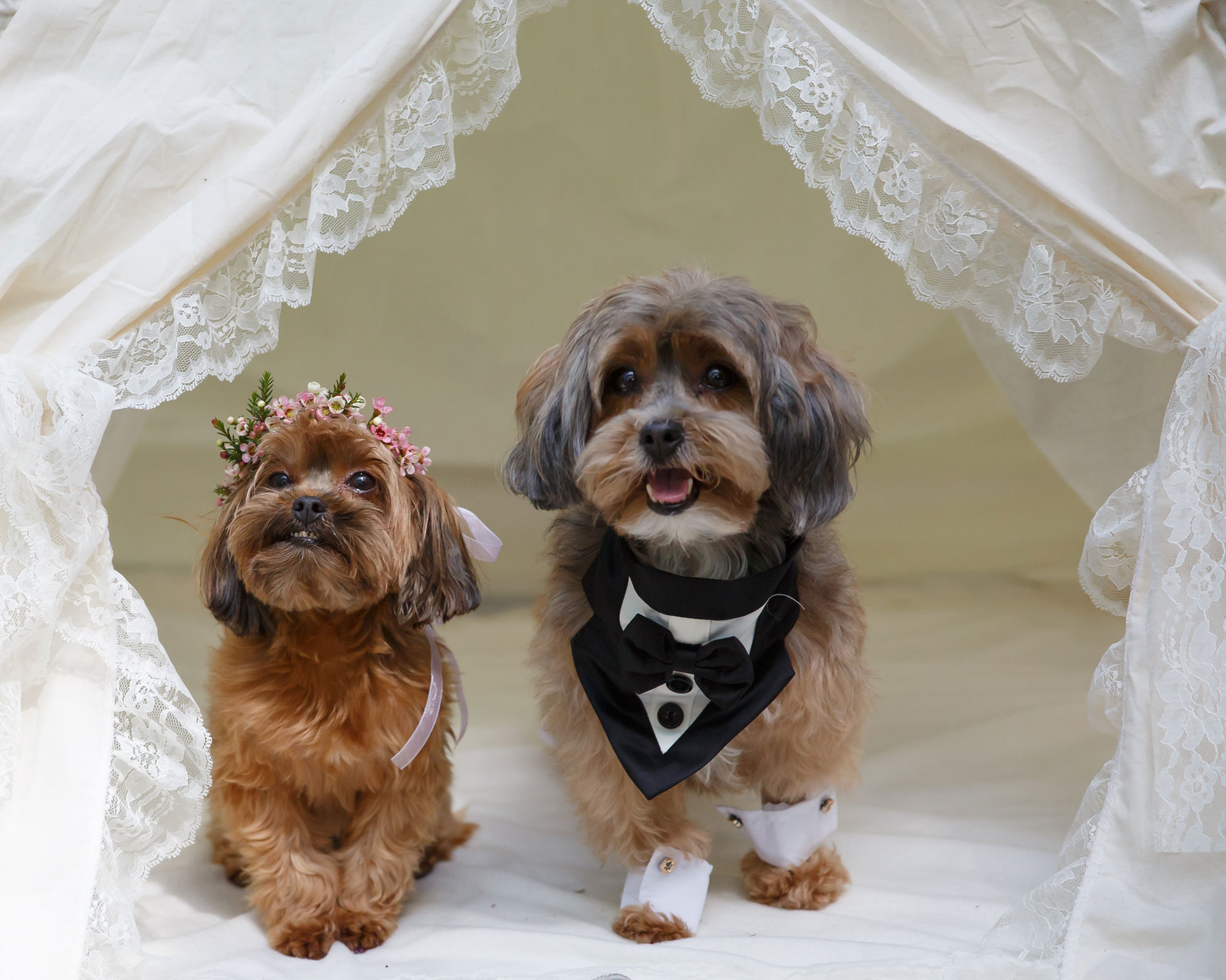 Dogs in Weddings – 15 Adorable Pups Dressed for a Celebration!