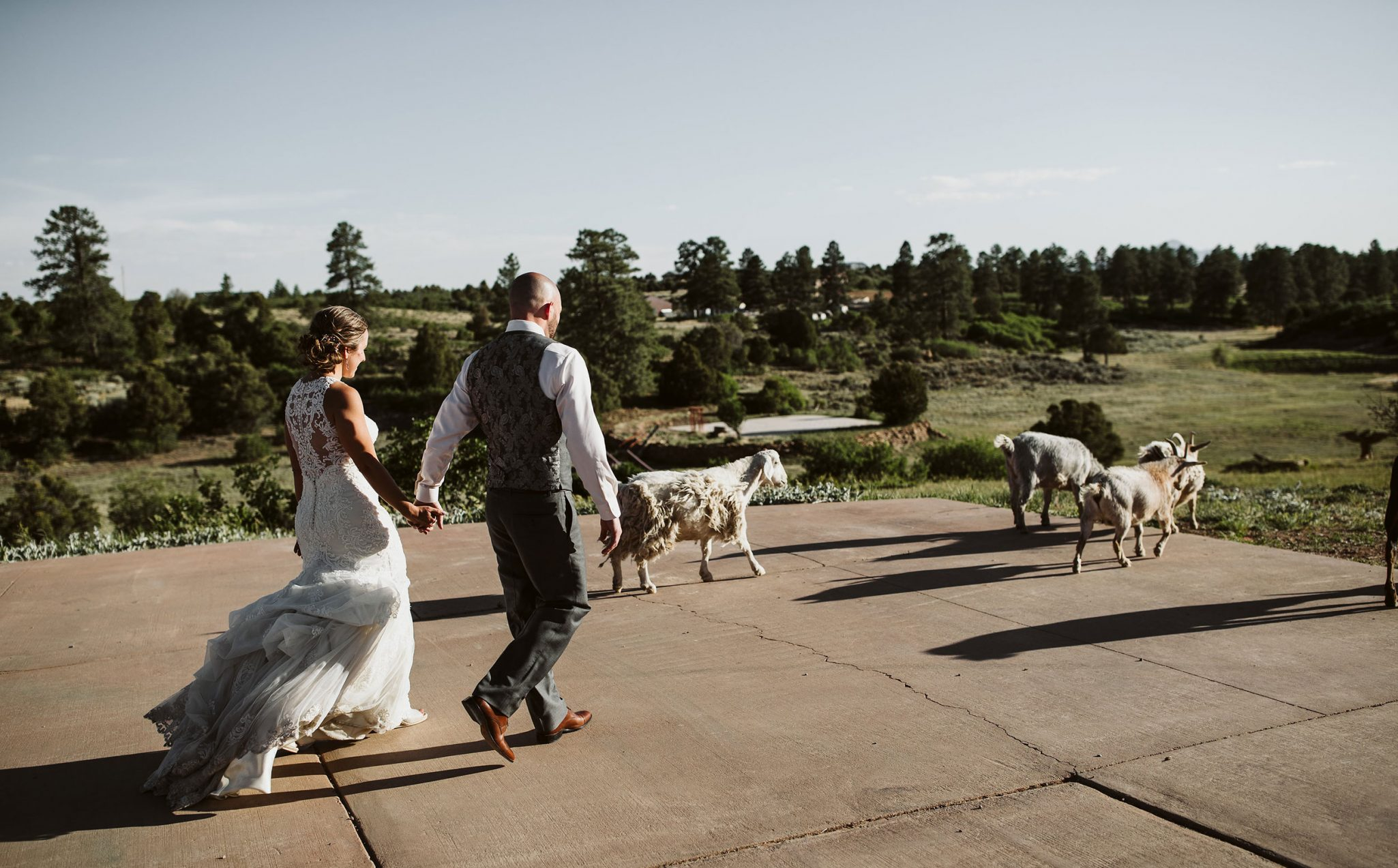 Happy bride & groom + goat at Sophia Retreat Center | Durango Weddings Magazine