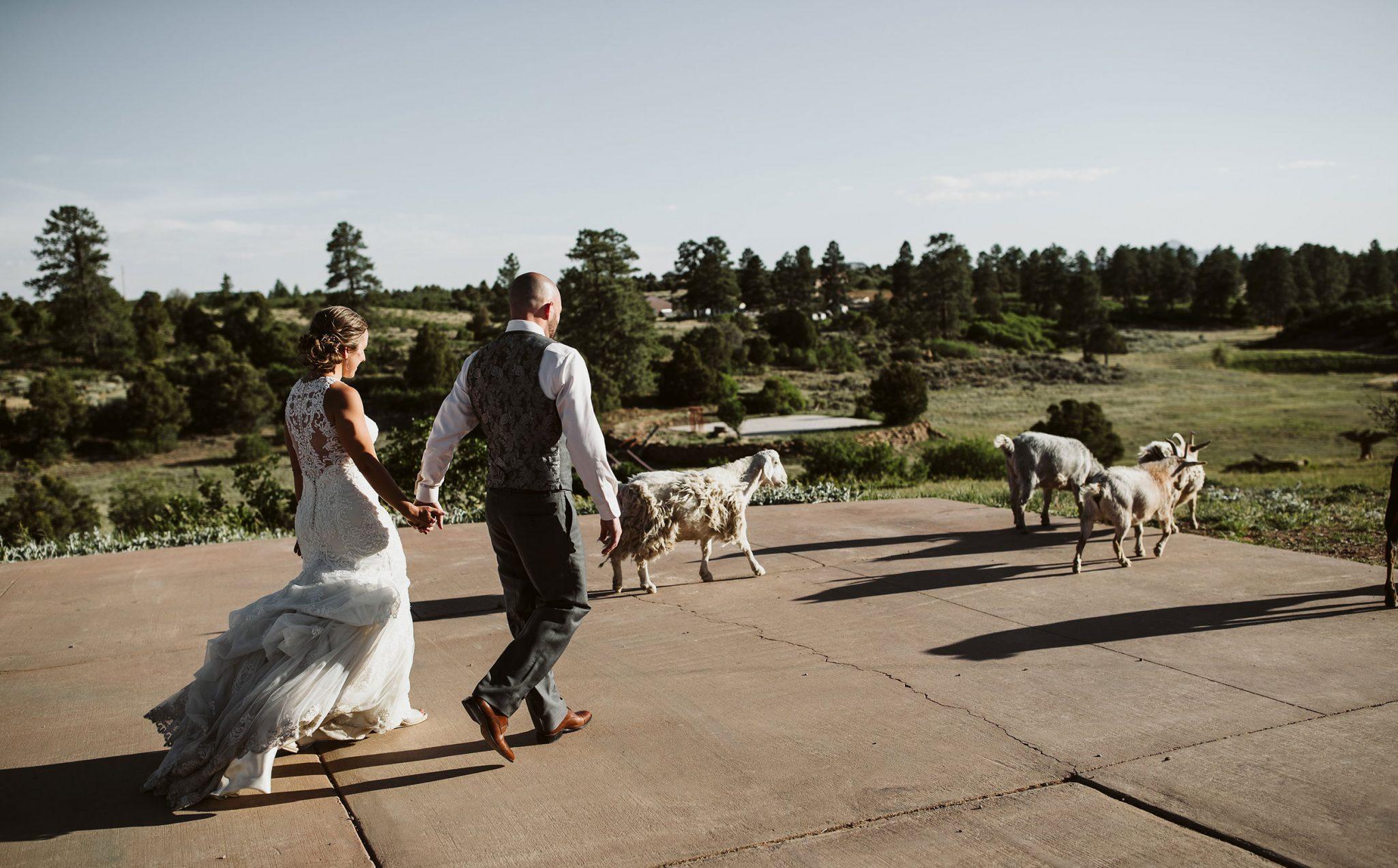 Happy bride & groom + goat at Sophia Retreat Center | Durango Weddings Magazine
