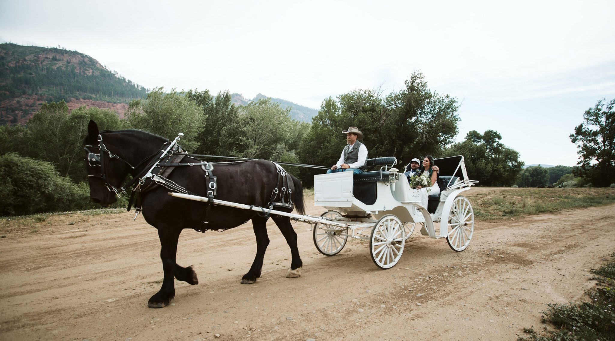 Bride & Groom in horse-drawn carriage