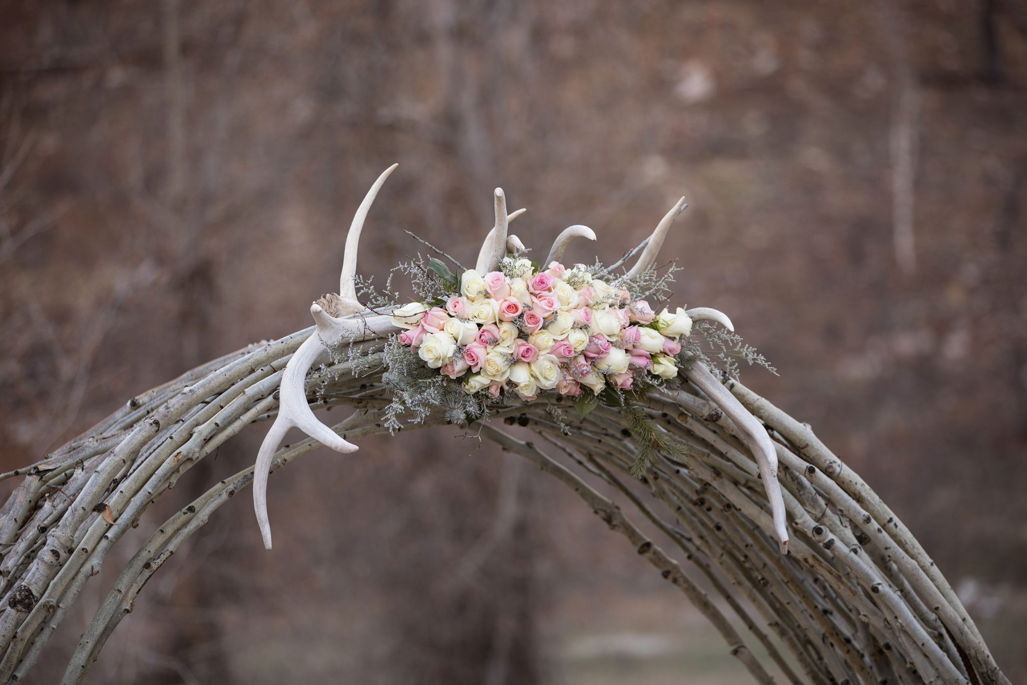Rose covered antler arch of aspens